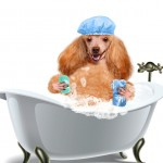 Smart K9 Boutique - Bath Time