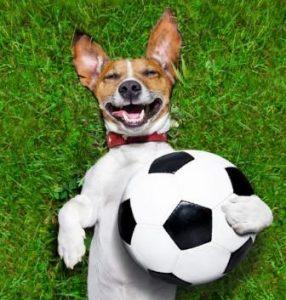 Smart K9 Boutique - Euros Football Dog