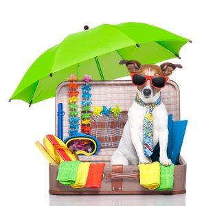 Smart K9 Boutique - Dog Summer Vacation