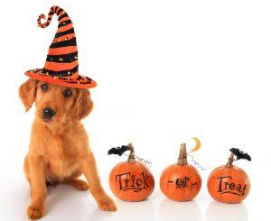 Smart K9 Boutique - Halloween Treats