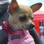 Smart K9 Boutique - Leeds Donkey Sanctuary Fun Dog Show June 2017