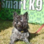 Smart K9 Boutique - Arthington Show July 17