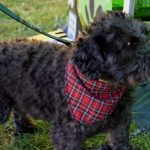 Smart K9 Boutique - Bronte Vintage Gathering