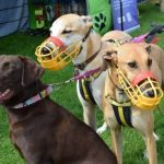 Smart K9 Boutique - Duncombe Park Country Fair