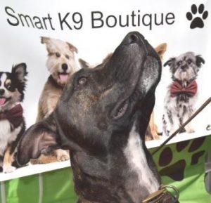Smart K9 Boutique - VW Festival Harewood