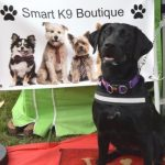 Smart K9 Boutique - VW Festival Harewood