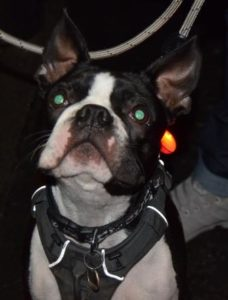 Smart K9 Boutique - Burley-in-Wharfedale Christmas Lights