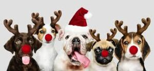 Smart K9 Boutique - 2020 Dogs with Antlers