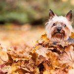 Smart K9 Boutique - Autumn Dog Coats