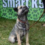 Smart K9 Boutique - VW Festival Harewod Aug 16