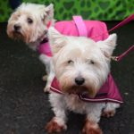 Smart K9 Boutique - Burley In Wharfedale Christmas Lights Dec 16