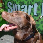 Smart K9 Boutique - Wrose Carnival July 17
