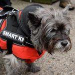 Smart K9 Boutique - Saltaire Produce Market