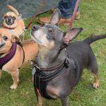 Smart K9 Boutique - Leeds Donkey Sanctuary Fun Dog Show
